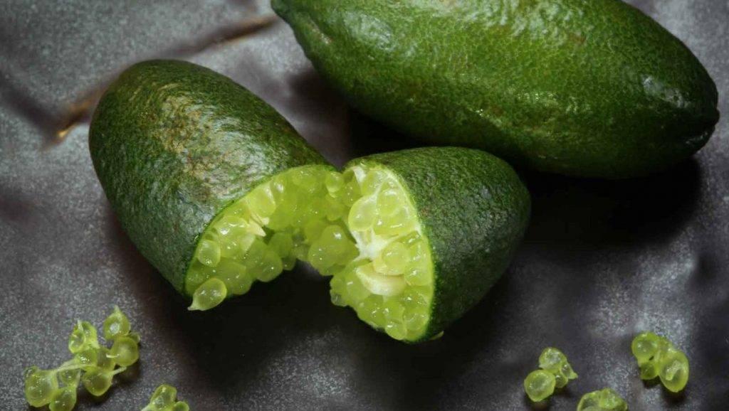 Você sabe o que é o Limão-caviar? Ou nunca viu, nem comeu, nem ouviu falar?