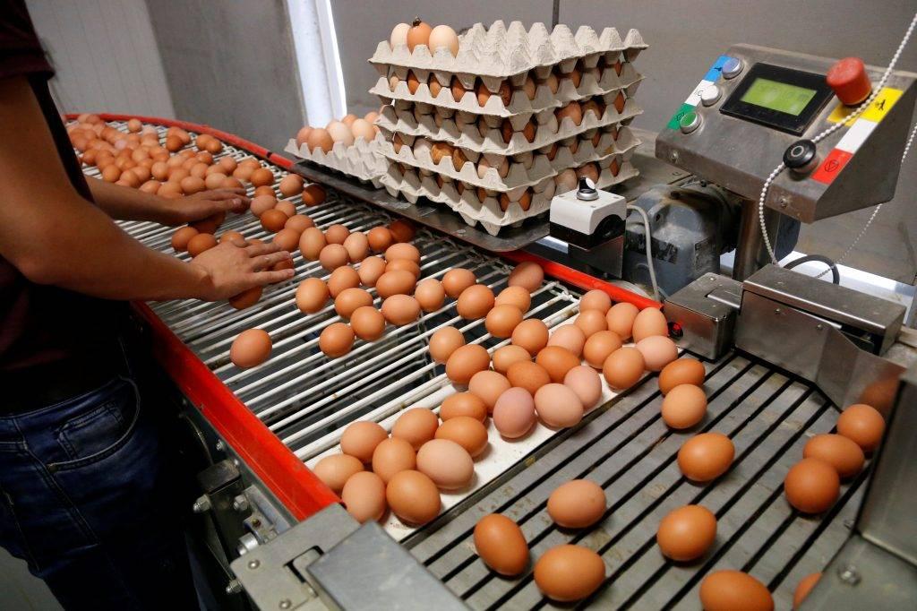 Pandemia e quaresma acarretam em falta de ovos no mercado