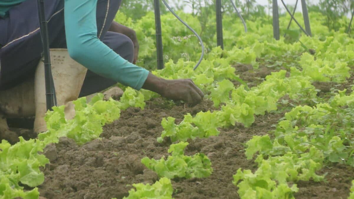 Licorbaiano é o 1º do segmento a conquistar o Selo da Agricultura Familiar no estado