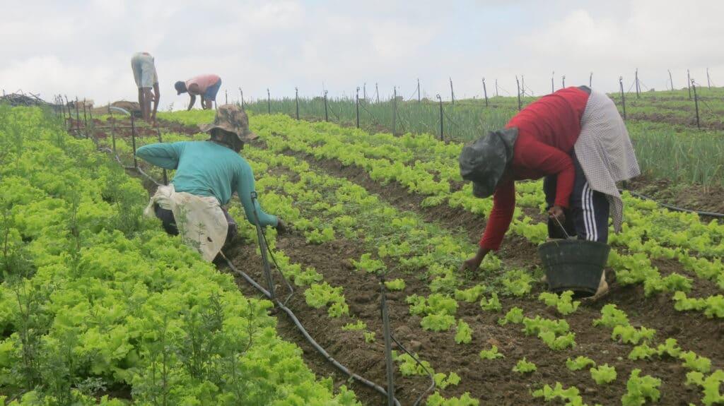 Agricultura Familiar Foto Acervo Lemavos 2